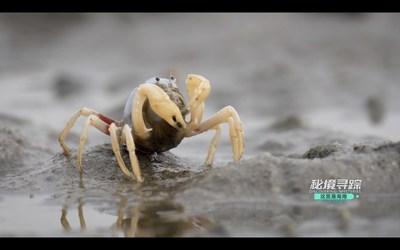 Descubriendo Misterios: lanzamiento de la nueva temporada del documental de la naturaleza de Hainan